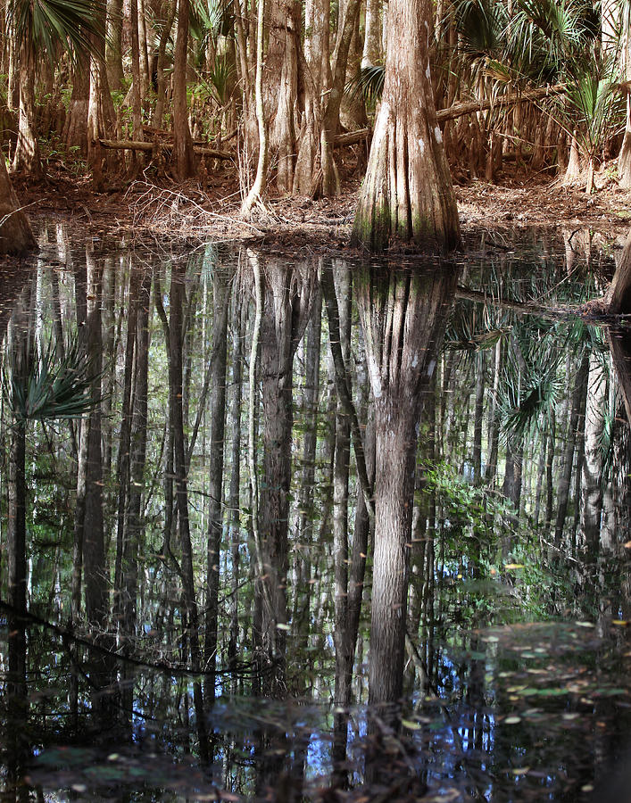 Cypress Swamp Reflections Photograph
