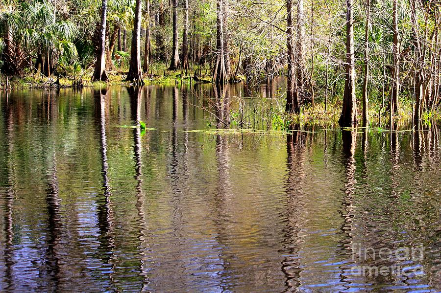 Cypress Trees Along The Hillsborough River Photograph