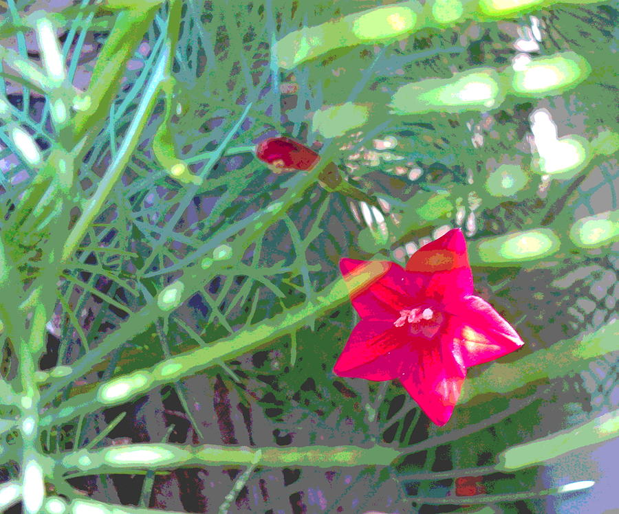 Cypress Vine With Foliage Photograph