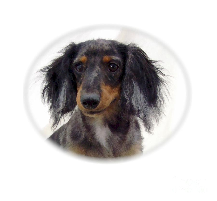 Dachshund 07 Digital Art