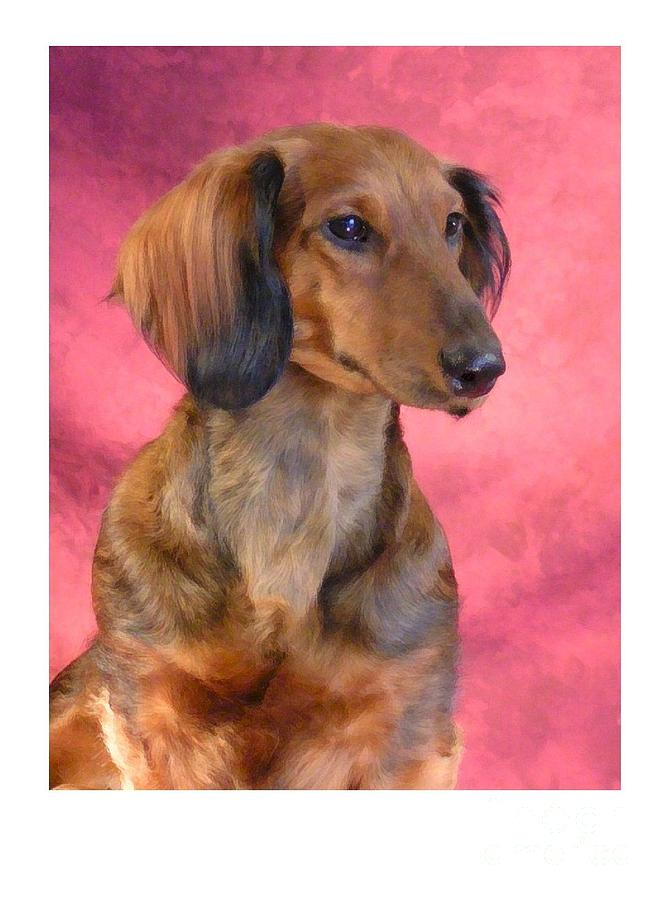 Dachshund Digital Art - Dachshund 472 by Larry Matthews