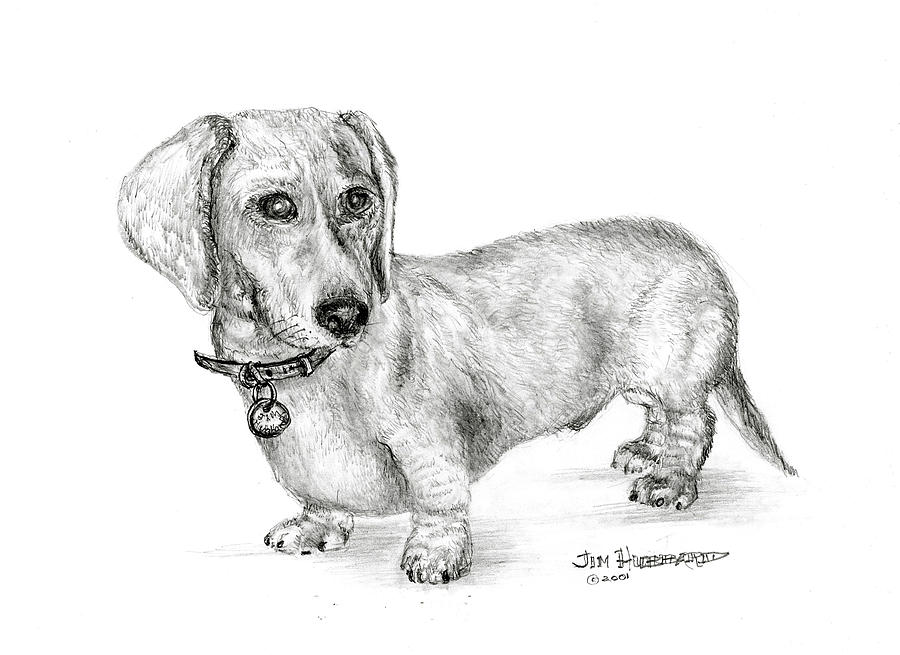 Dachshund Drawing by Jim Hubbard - Dachshund Fine Art Prints and ...