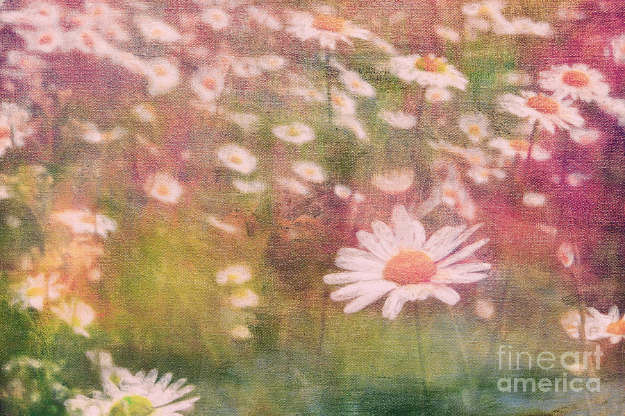 Daisy Digital Art  - Daisy Fine Art Print