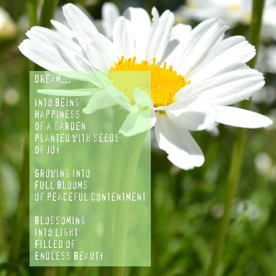 Daisy Dream Poem Photograph Poems About Daisy Flowers