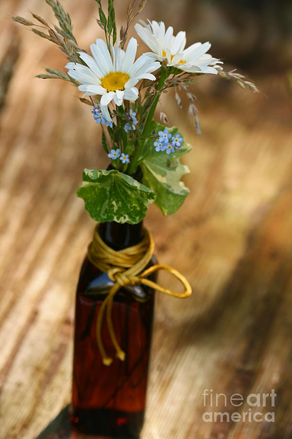Daisy In A Bottle Photograph