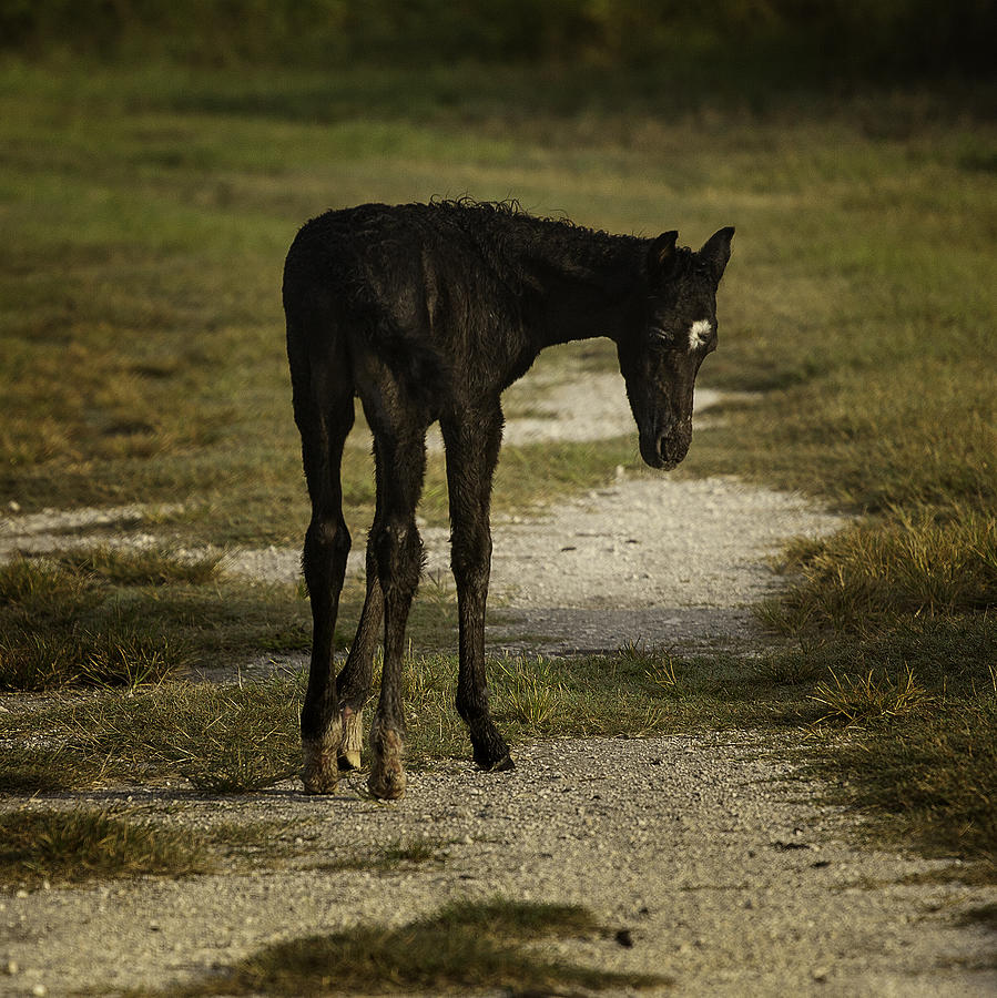 Damp Cracker Foal Photograph  - Damp Cracker Foal Fine Art Print