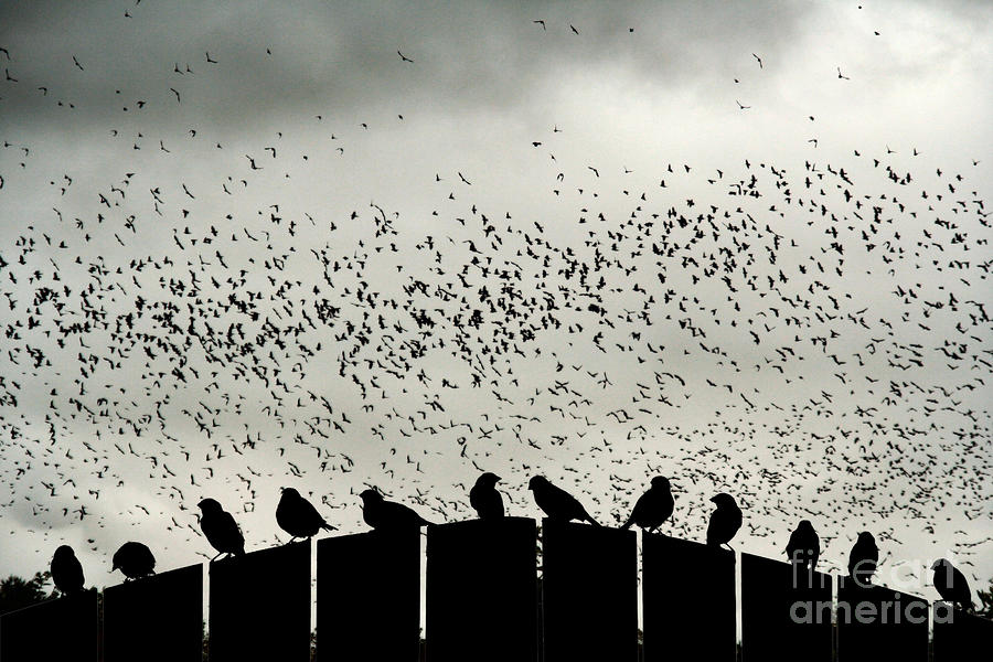Dance Of The Migration Photograph  - Dance Of The Migration Fine Art Print