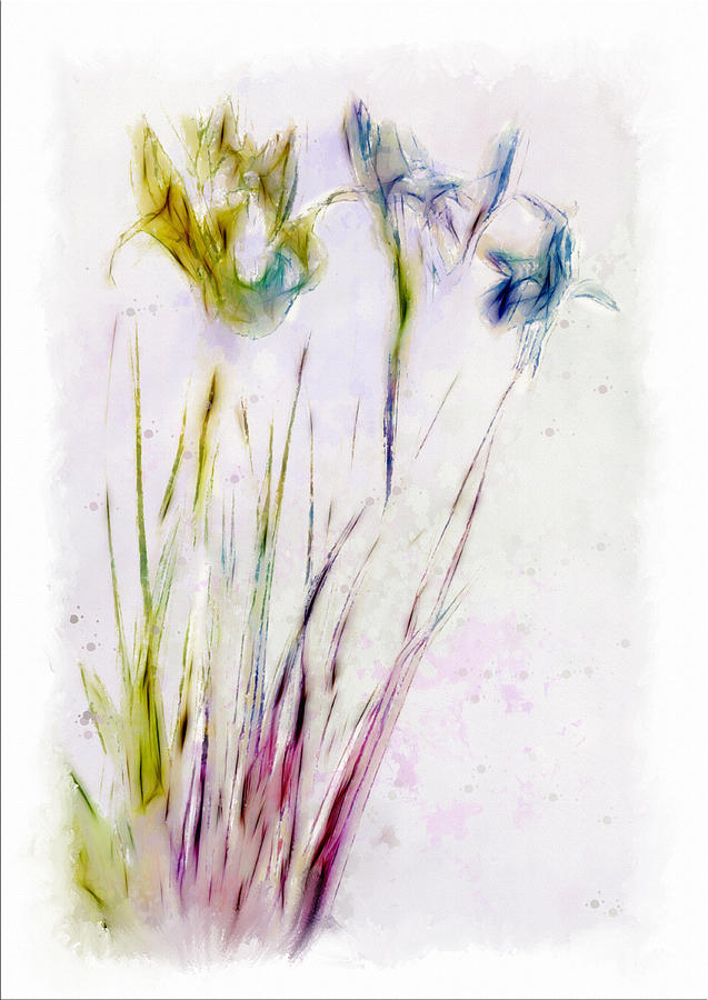Dancing Irises Digital Art