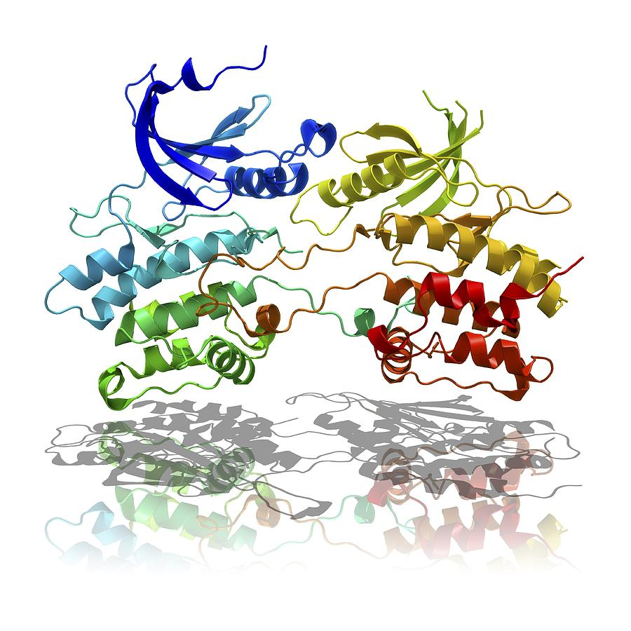 Dapk3 And Pyridone 6 Proteins Photograph
