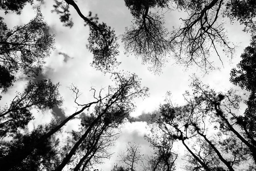 Dark Forest Photograph