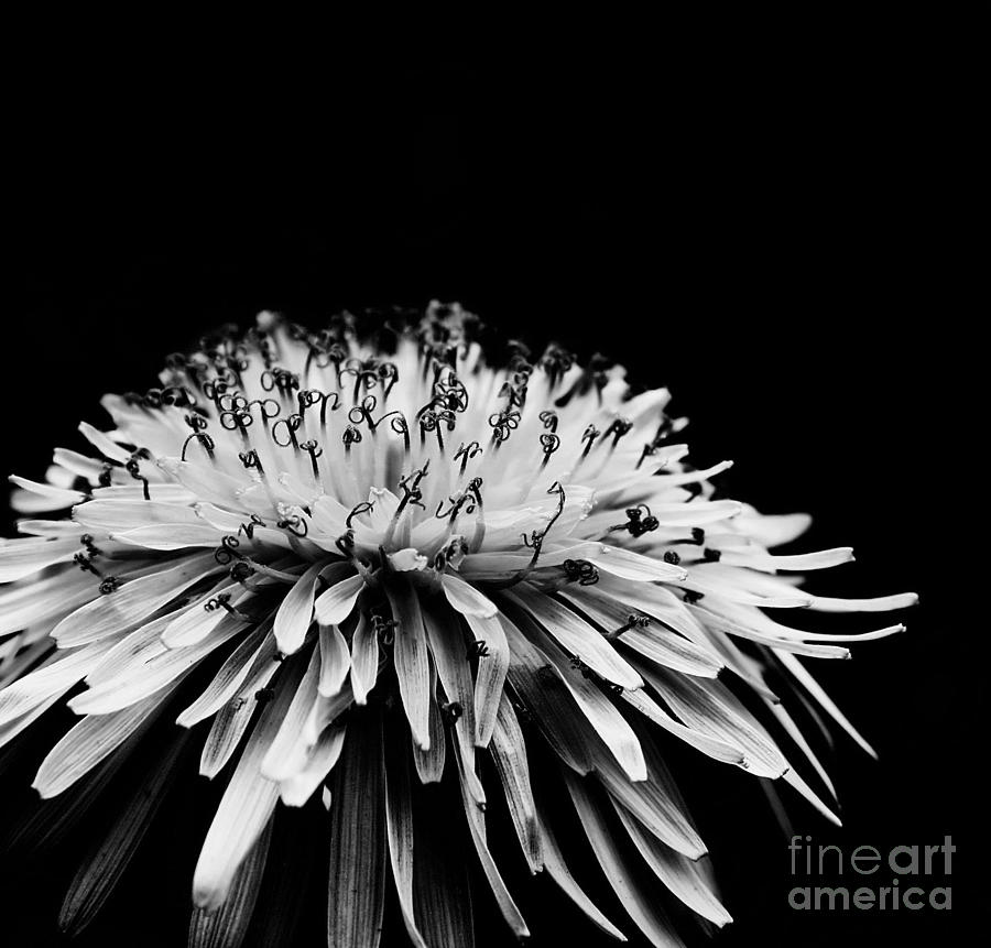 Dark Photograph  - Dark Fine Art Print