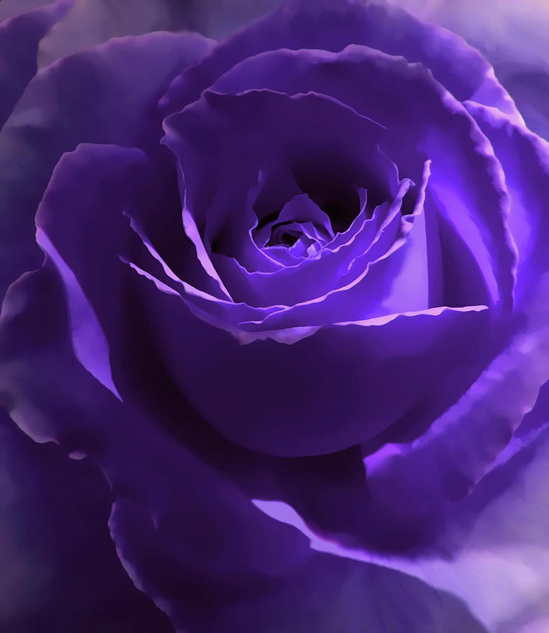 Dark Secrets Purple Rose Photograph