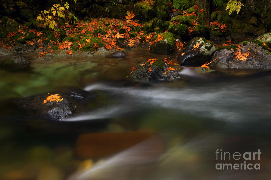 Dark Water Autumn Photograph