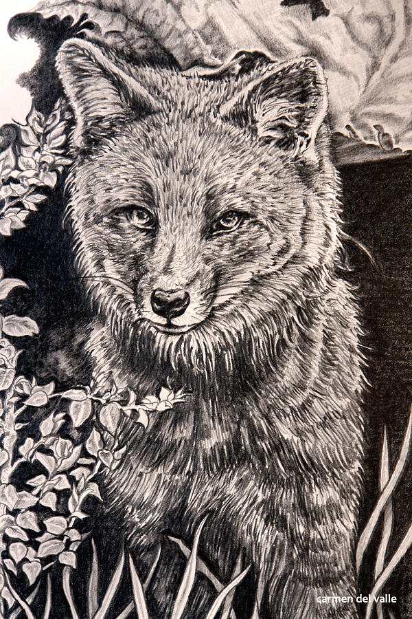 darwins fox close up drawing by carmen del valle