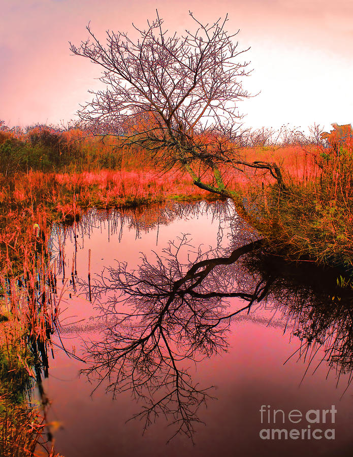 Marsh Sunrise Fog Stream Tree Dawn  Photograph - Dawn On The Marsh by Nick Zelinsky
