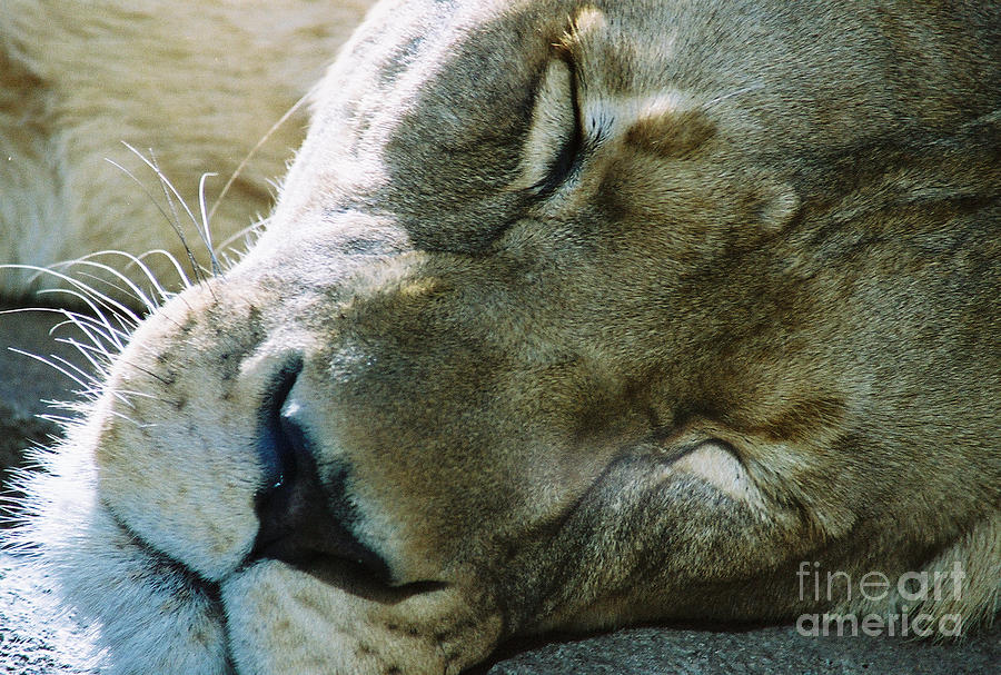 Day Nap Photograph  - Day Nap Fine Art Print