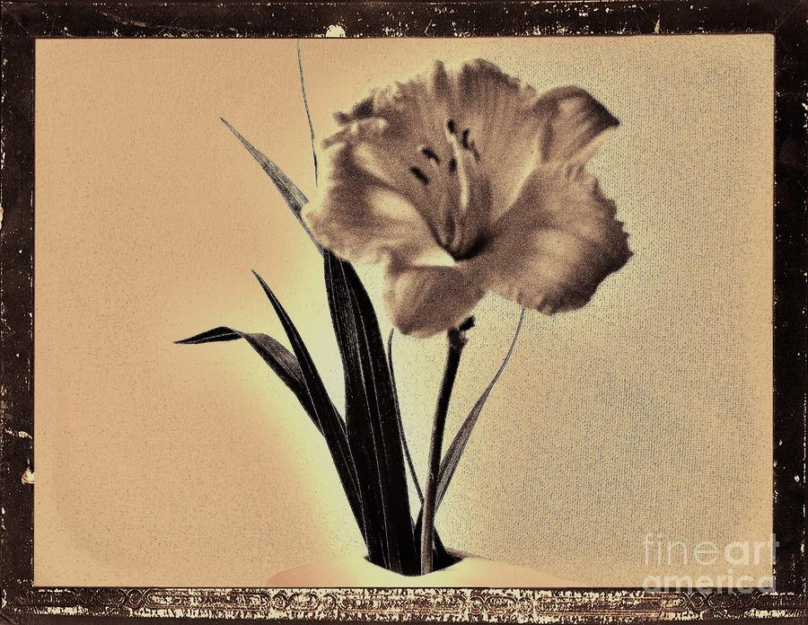 Daylily Of Old Photograph  - Daylily Of Old Fine Art Print