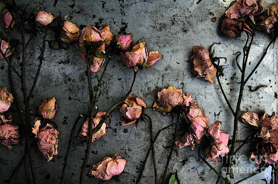 Засохший цветок фото