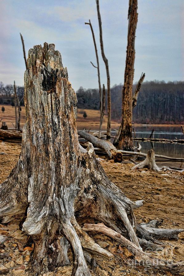 Dead Wood Photograph