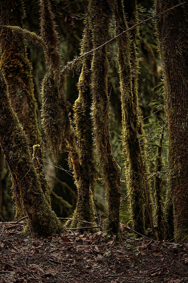 Deep Woods Photograph  - Deep Woods Fine Art Print