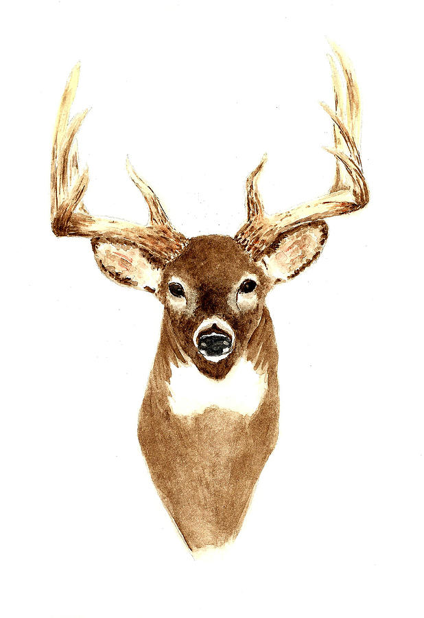 Deer - Front View Painting  - Deer - Front View Fine Art Print