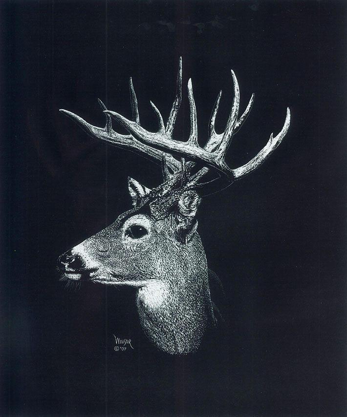 Deer Head Drawings