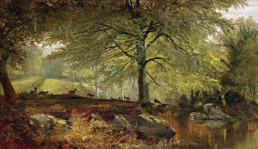 Deer In A Wood Painting