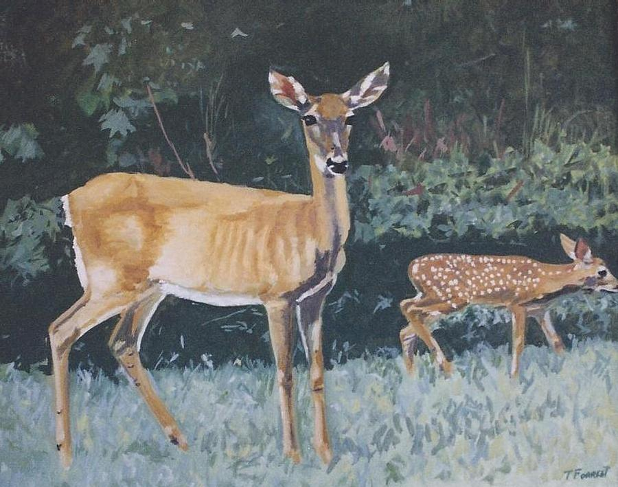 Deer In The Okefenokee Swamp by Terry Forrest