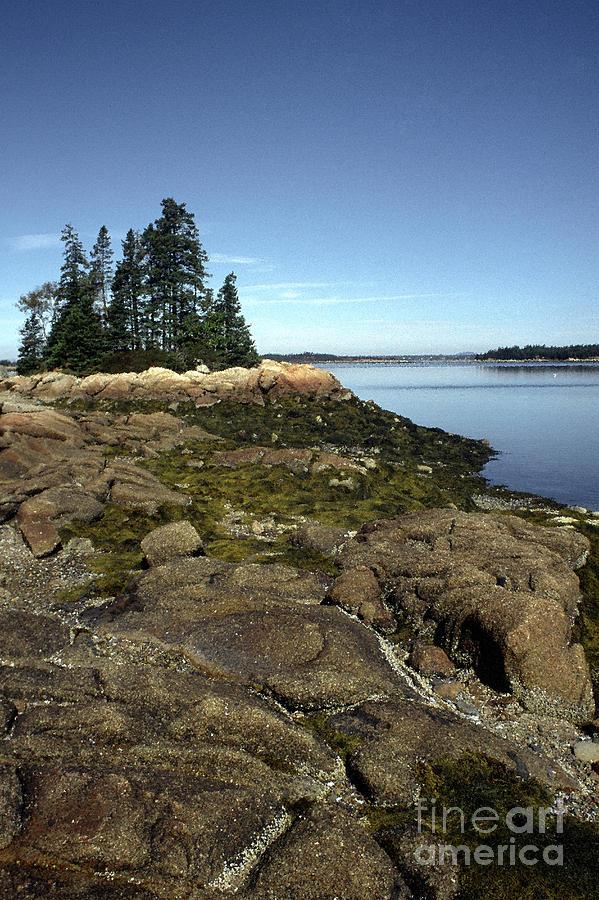 Deer Isle Granite Shore Photograph