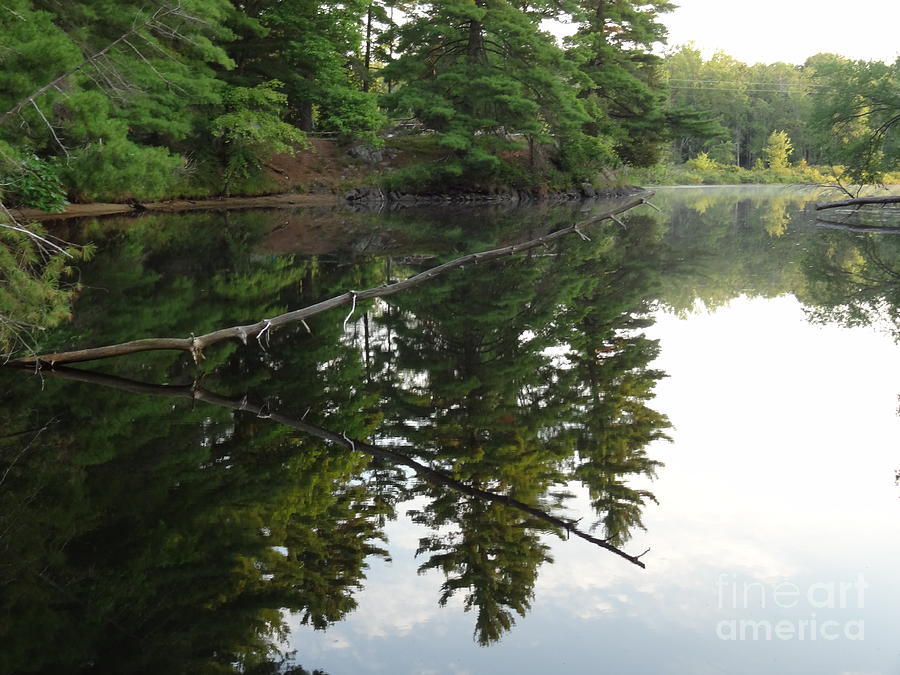 Deer River Reflection Photograph