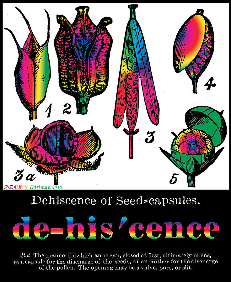Dehiscence Digital Art  - Dehiscence Fine Art Print