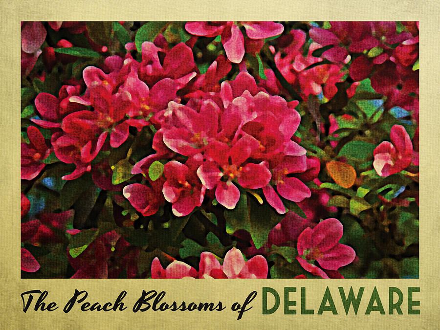 Delaware Peach Blossoms Digital Art  - Delaware Peach Blossoms Fine Art Print