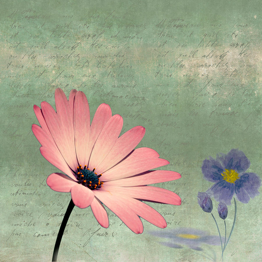 Delicate Flower Photograph