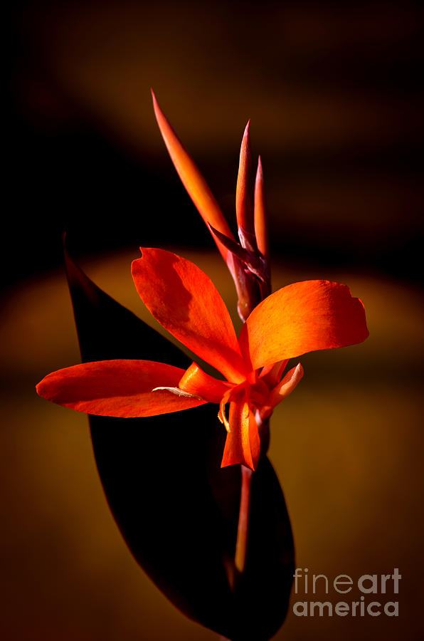 Delicate Orange Photograph  - Delicate Orange Fine Art Print