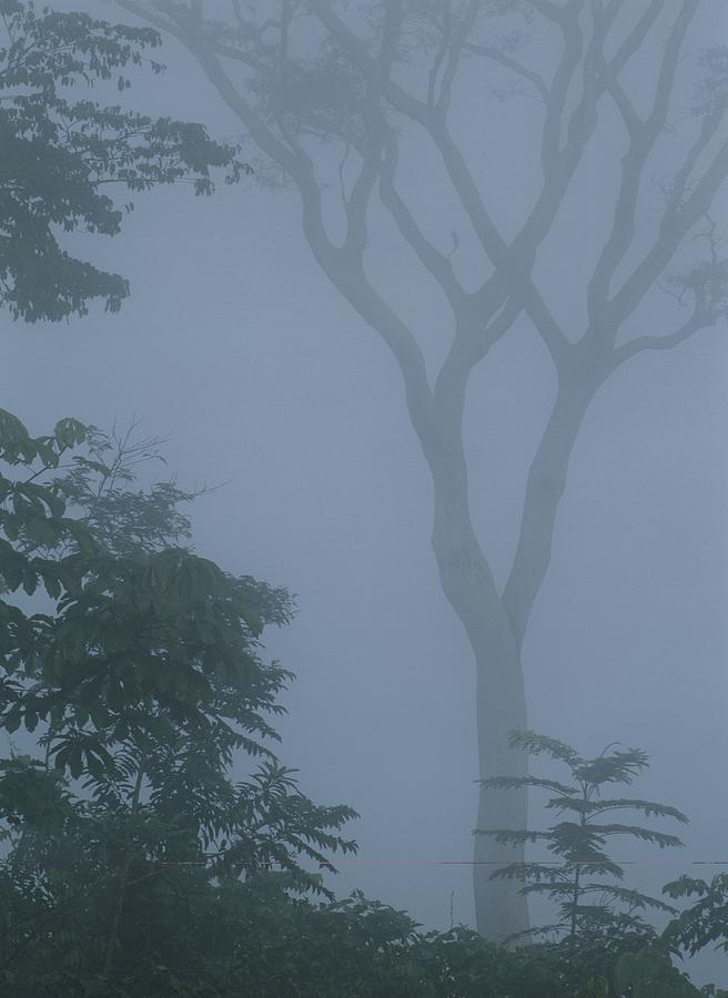 Delicate Trees Appear Out Of The Mist Photograph  - Delicate Trees Appear Out Of The Mist Fine Art Print