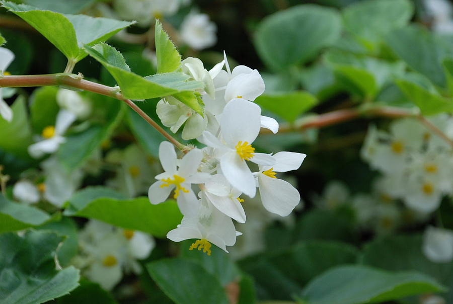 Delicate White Flower Photograph
