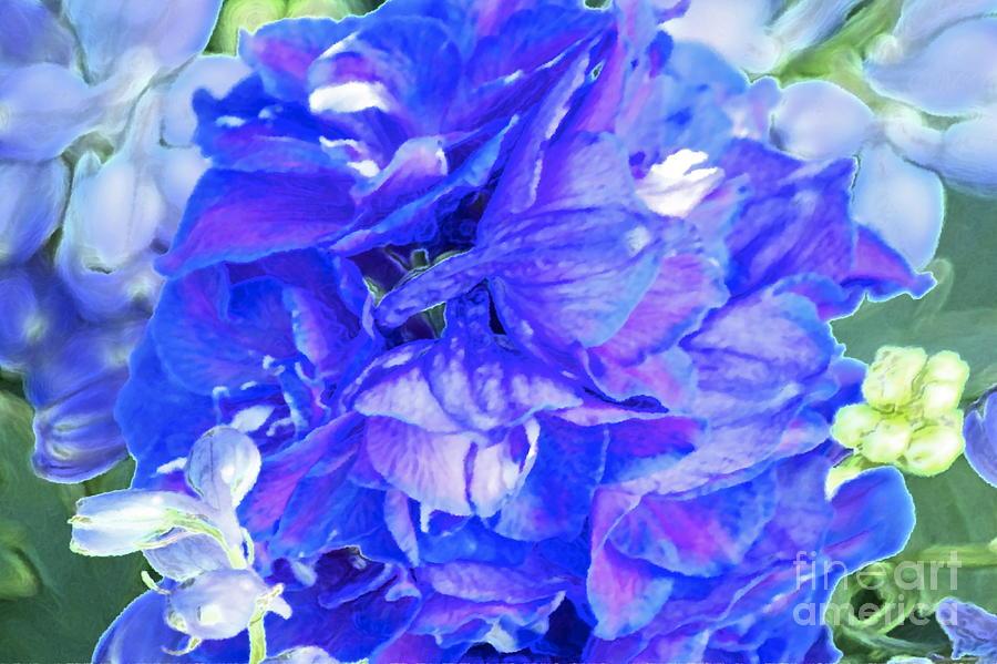 Delphinium Blue Photograph