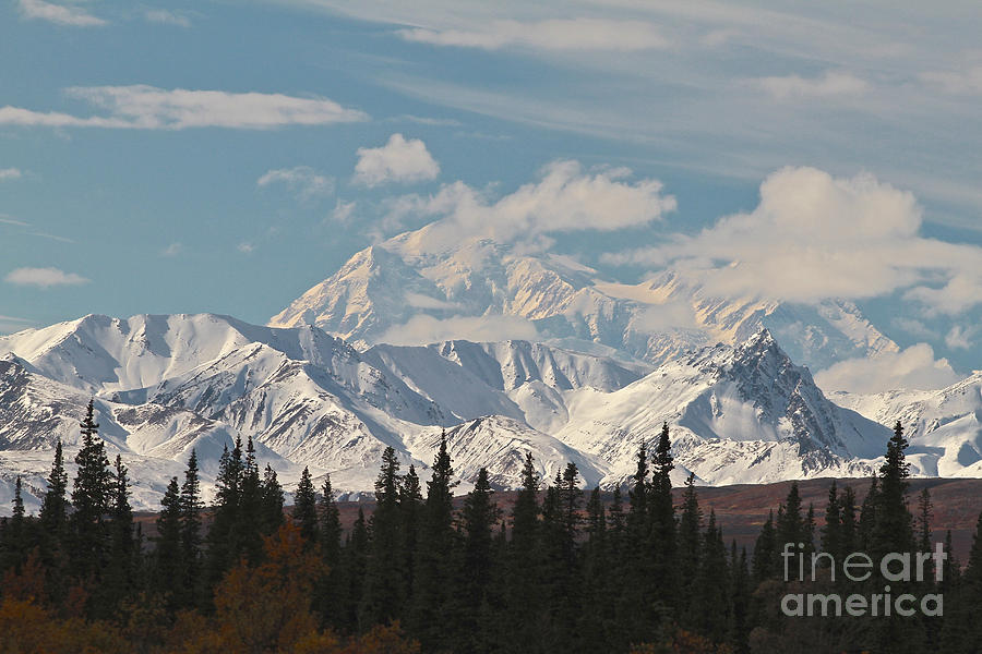 Denali In Broad Pass Photograph  - Denali In Broad Pass Fine Art Print