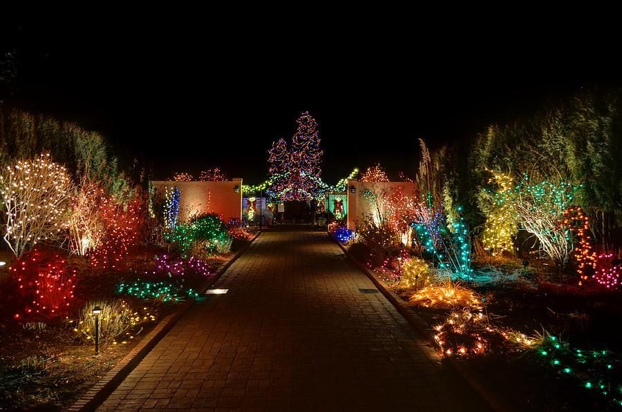 Denver Botanic Garden Lights Swingle Shares Best Places To View Lights In Blossoms Of Lights