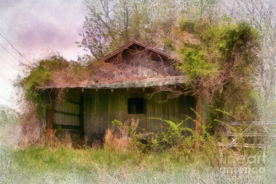 Derelict Photograph - Derelict Shed by Susan Isakson