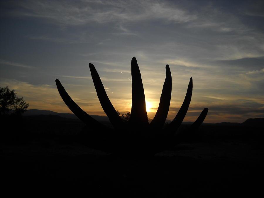 Landscape Sculpture - Desert Bloom by Aj Willams