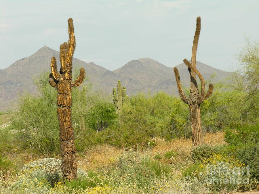 Cactus Frenzy! « Chihuahuan Desert Nature Center