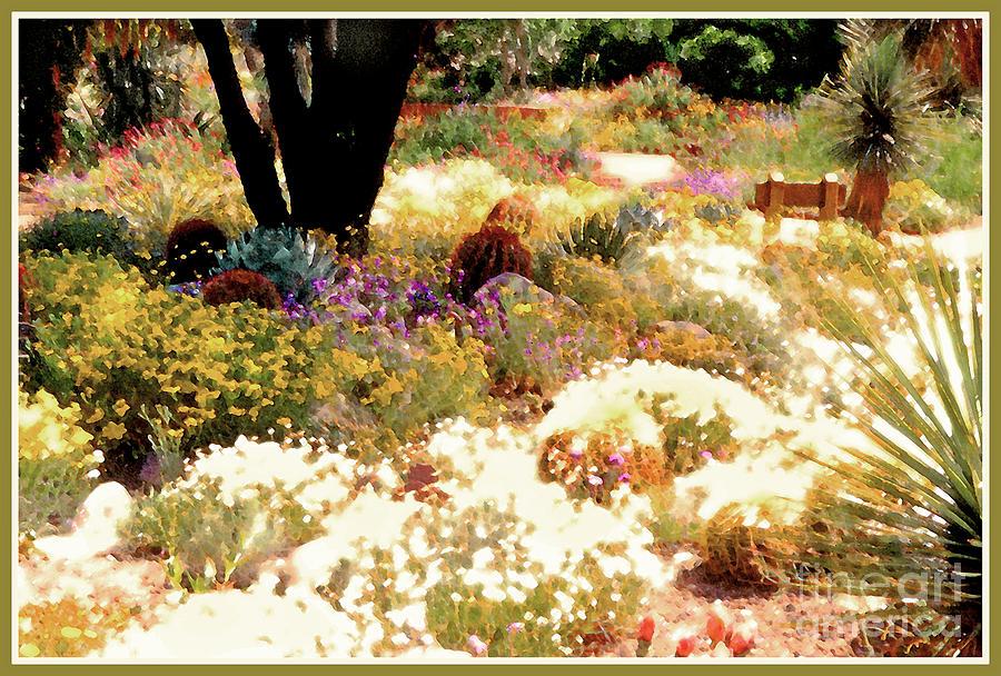 Desert Garden Photograph
