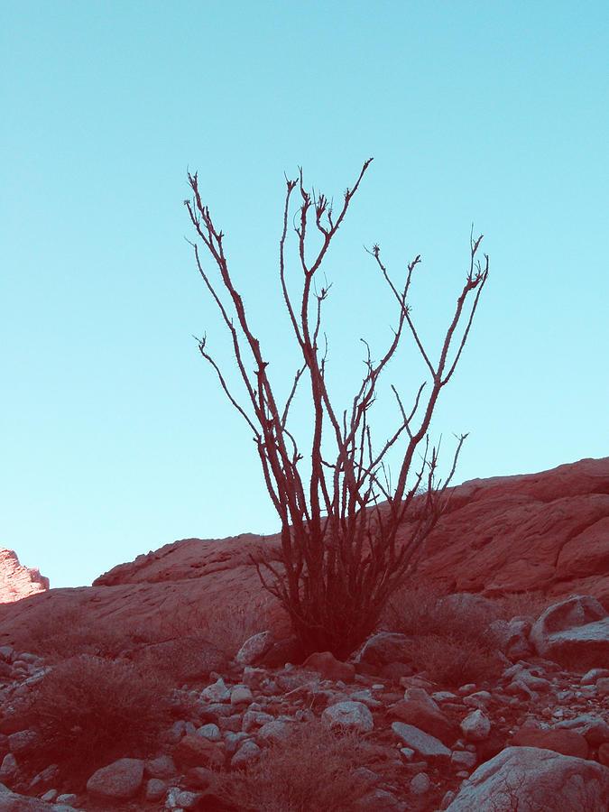 Desert Plant Photograph