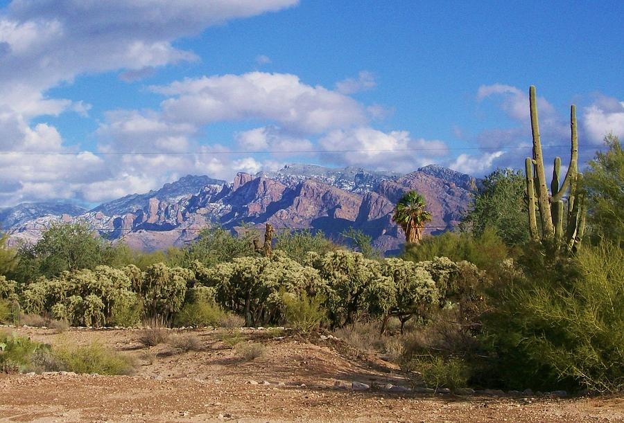 Desert Tucson by Kathleen Heese