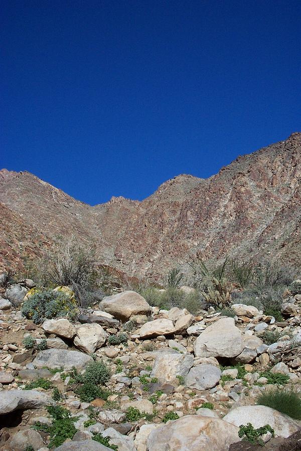 Desertscape Photograph