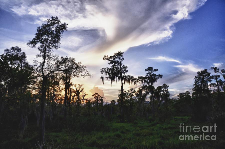 Destrehan Swamp Sunset Photograph