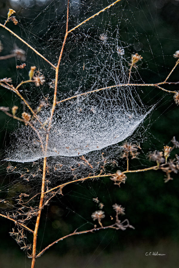 Dew Drenched Photograph