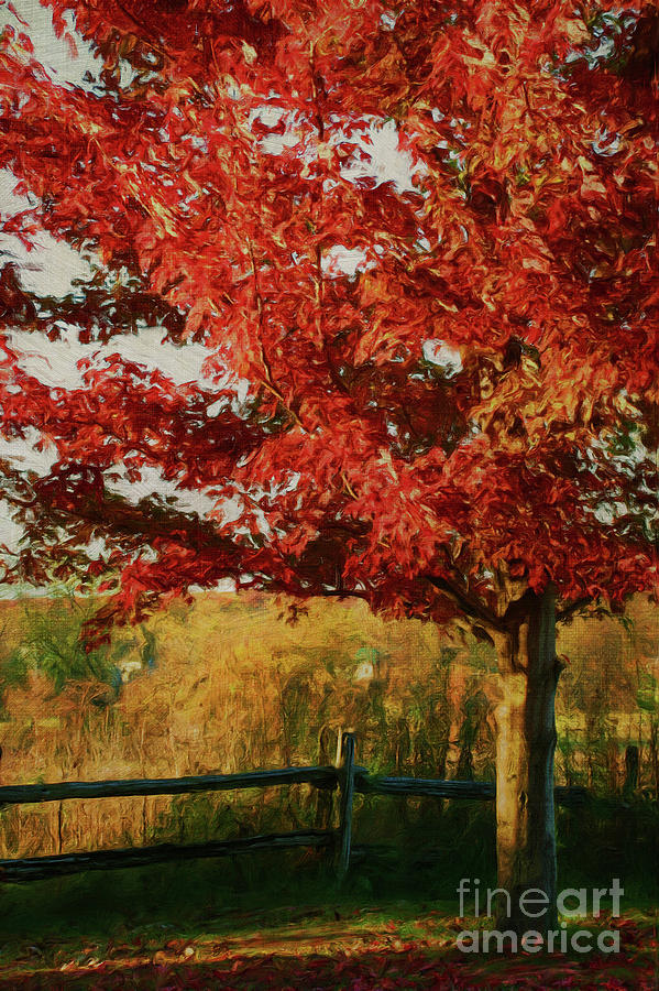 Digital Painting Maple Tree In Full Color Photograph  - Digital Painting Maple Tree In Full Color Fine Art Print