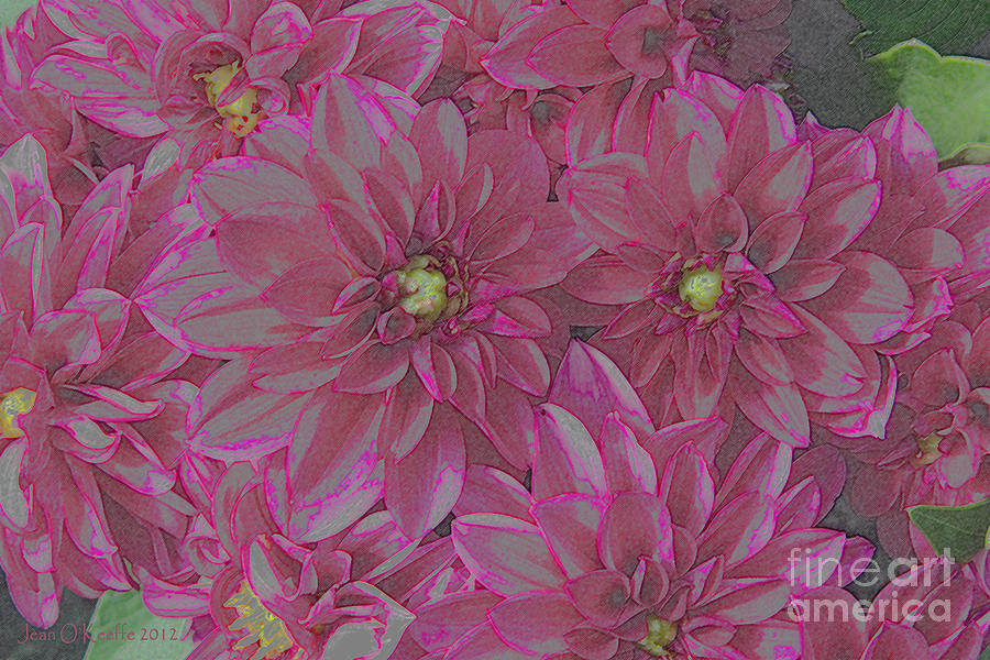 Dilly Dahlias Photograph  - Dilly Dahlias Fine Art Print